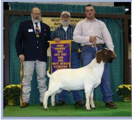 SNA Farms – ***Champion Boer Goat Bloodlines – Productive Breeding
